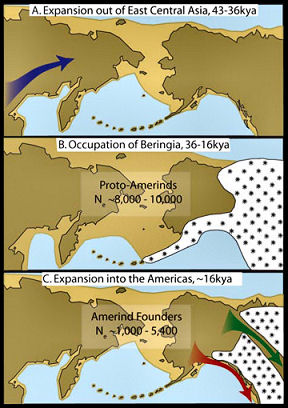 Maps labeled A, B, and C depict each phase of the new three-step colonization model for the peopling of the Americas. Light-brown areas are exposed seafloor and dark-brown areas are current land. The phrase kya indicates thousands of years. Amerinds are early Americans.