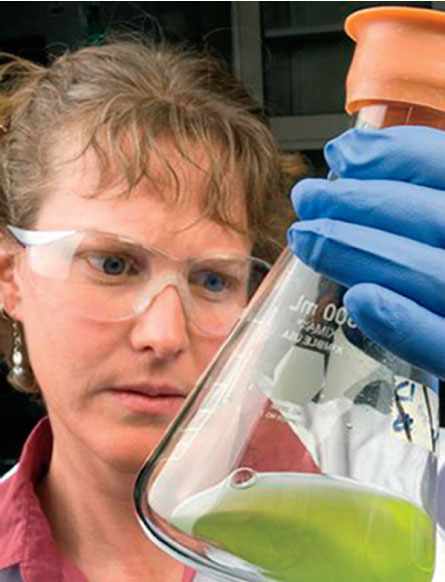 A researcher examining a sample of algal oil.