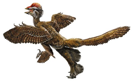 Anchiornis huxley