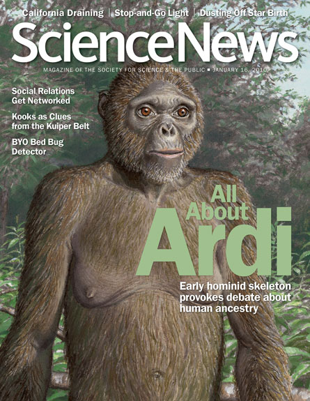 All about Ardi: Early hominid skeleton provokes debate about human ancestry