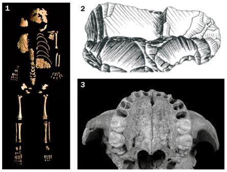Neandertal bones