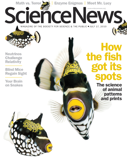 How the fish got its spots: The science of animal patterns and prints