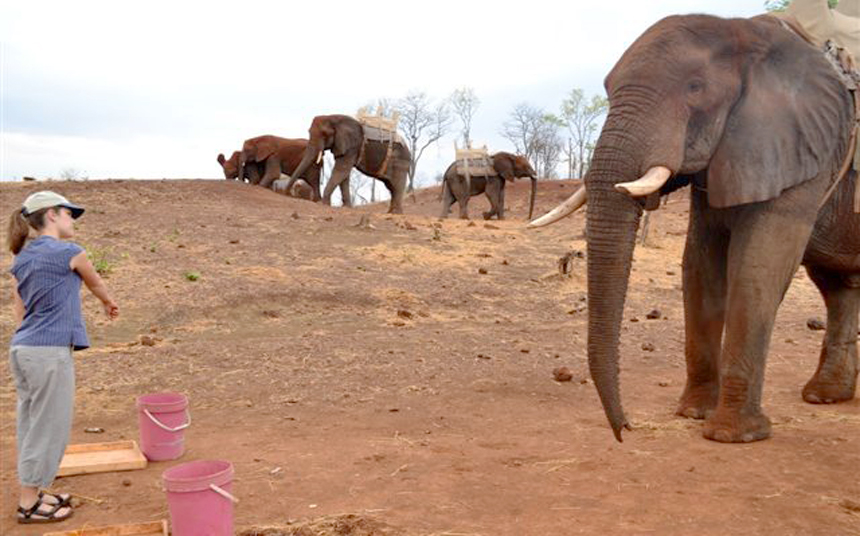 African elephants get the point