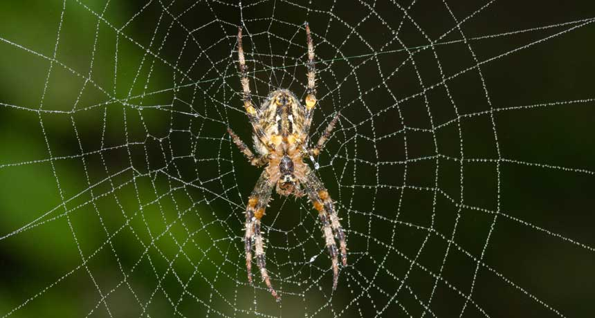 City spiders may spin low,vibe webs