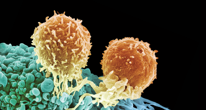 T cells attack a cancer cell