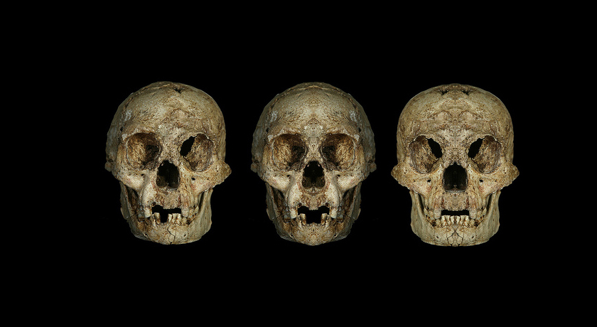 Homo floresiensis skull and reconstructions