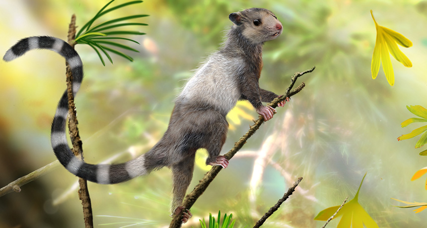 drawing mouse-sized mammal Xianshou songae