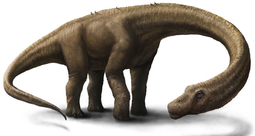 Dreadnoughtus schrani illustration