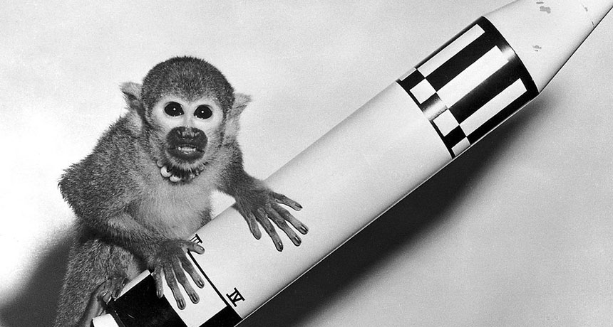 Miss Baker, squirrel monkey that went to space