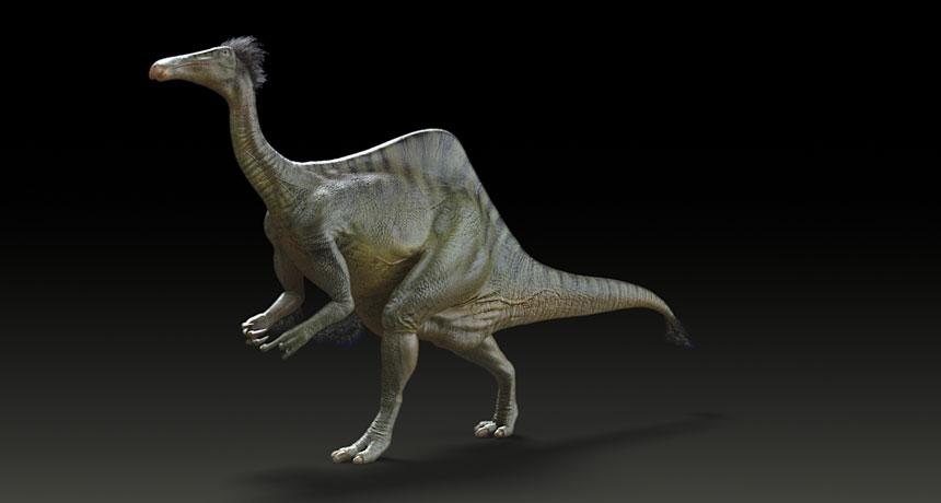 ostrichlike dinosaur drawing