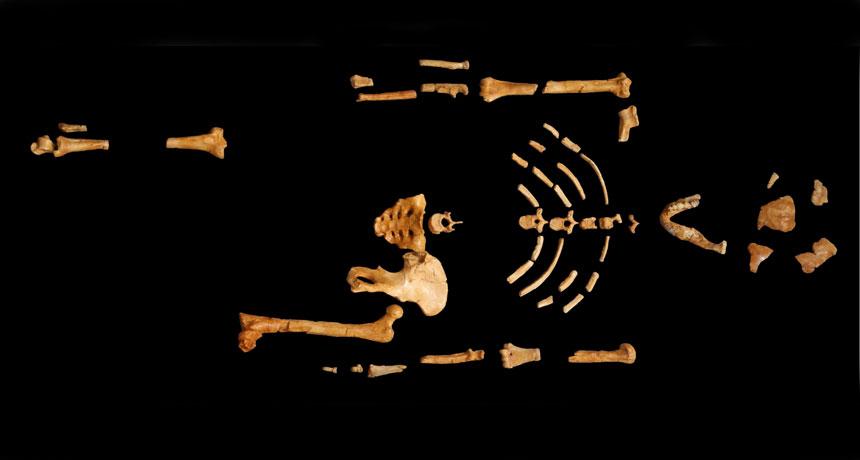 bones of a primitive human forerunner
