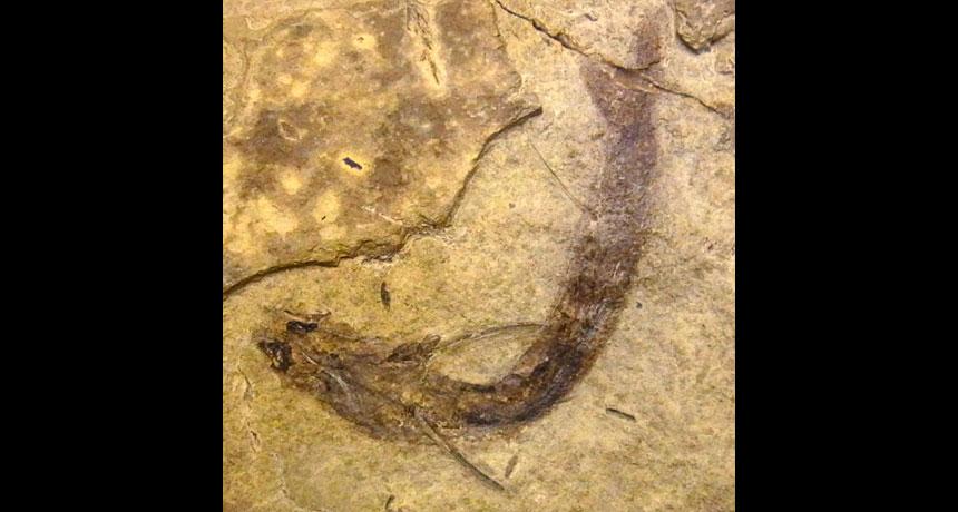 preserved fish