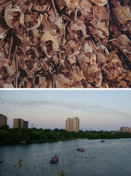 bats over the Colorado River