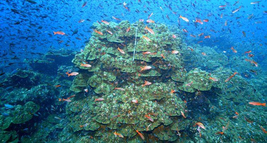 Galápagos Islands reef