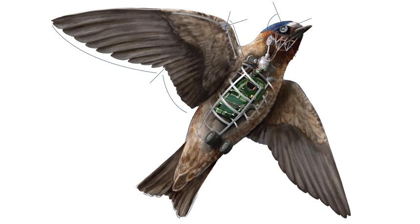 Robot bird illustration