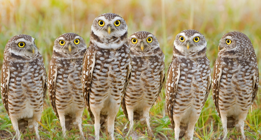 owls in a row