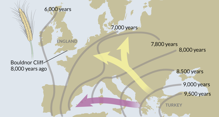 Map Of England 2000 Years Ago.Wheat Reached England Before Farming Science News