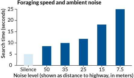 Foraging speed and ambient noise (graph)