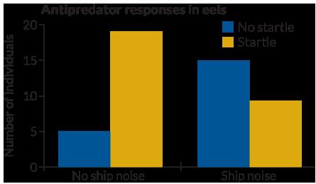 antipredator responses in eels