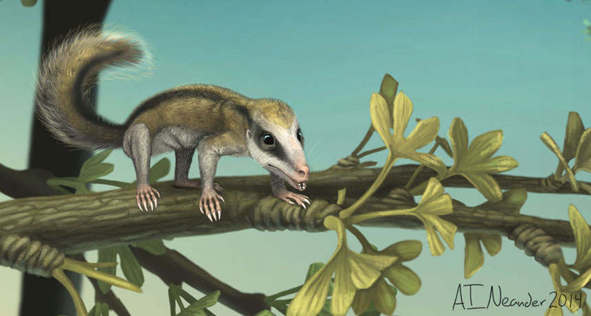 Mammal ancestor climbs tree
