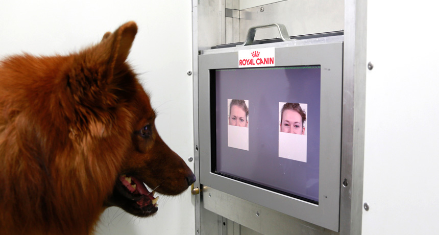 dog looking at a screen in a lab