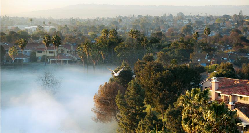 LA Fog