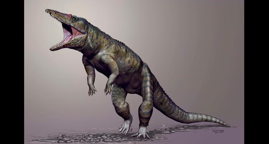 croc fossil