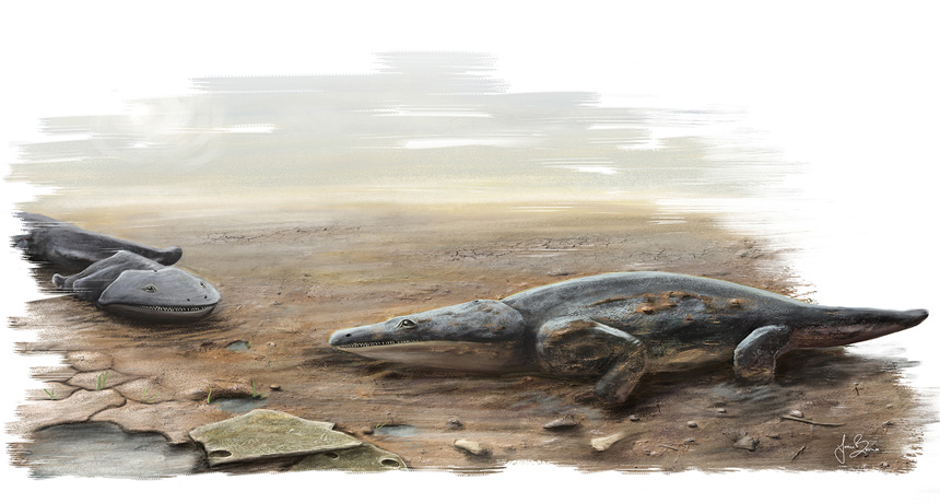 Illustration of Metoposaurus algarvensis