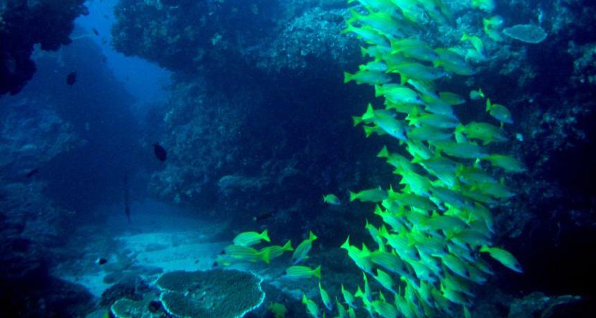 Reef at Sodwana Bay