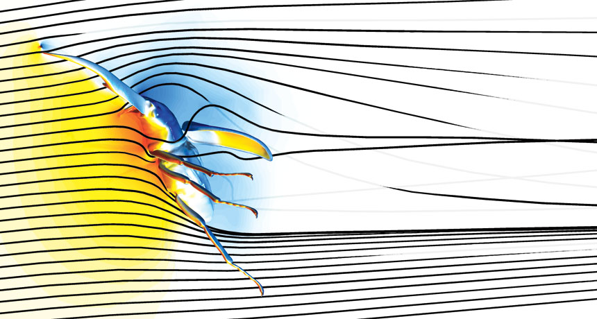 computer simulation of flying male beetle