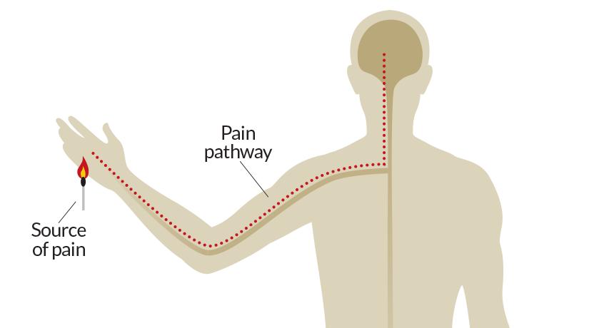 pain path