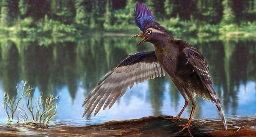 ancient species of wading bird