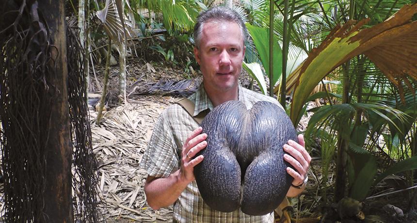 man holding coco-de-mer nut