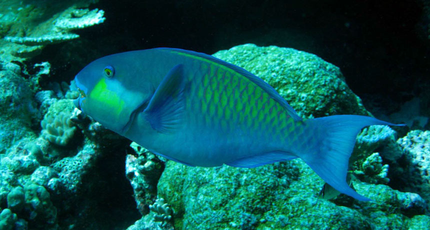 An Island In The Maldives Is Made Of Parrotfish Poop Science News
