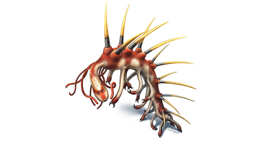 Hallucigenia sparsa, illustrated