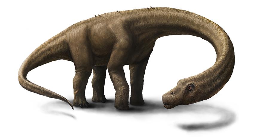 drawing of gigantic dinosaur Dreadnoughtus schrani