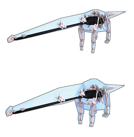 reconstruction of d. schrani dinosaur skeleton