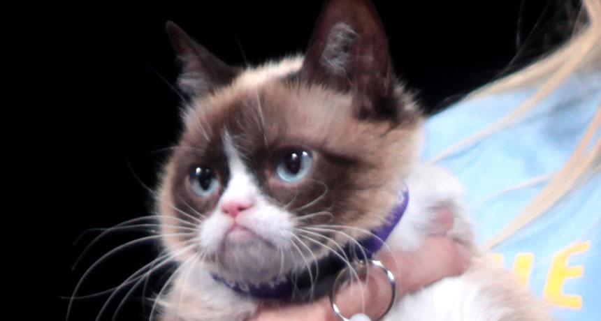 """Grumpy Cat"" pic"
