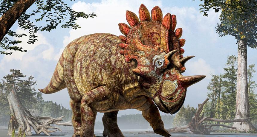 relative of Triceratops illustration