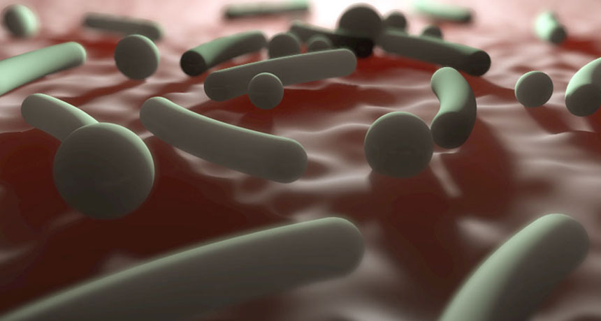 skin bacteria illustration