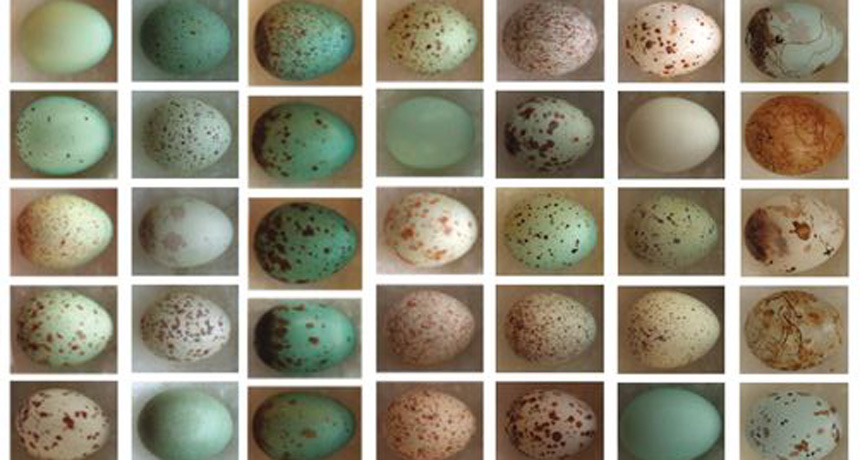 eggs with patterns