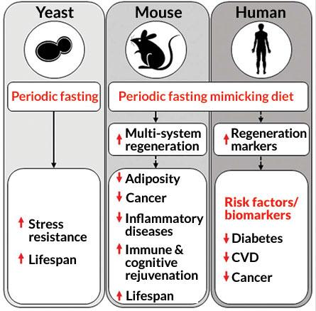 fasting data