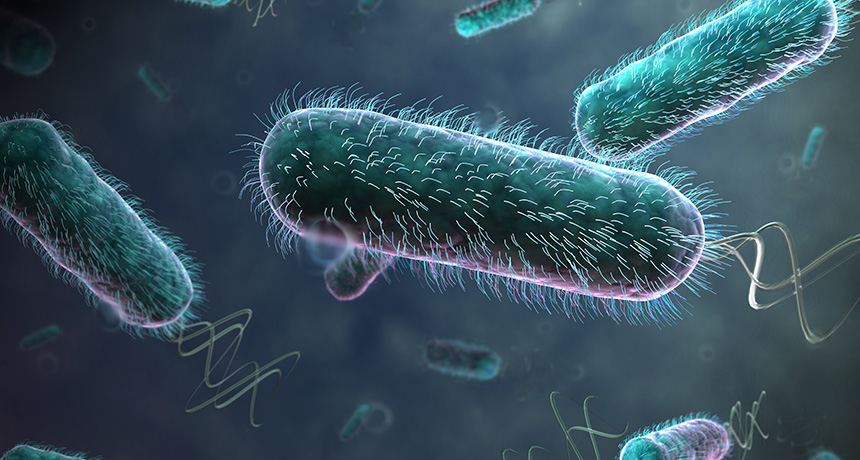 E. coli illustrated