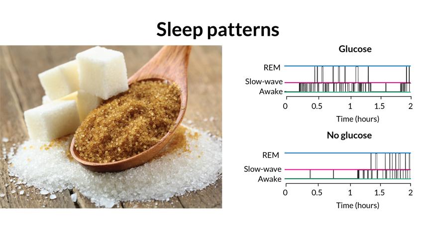 sugar data