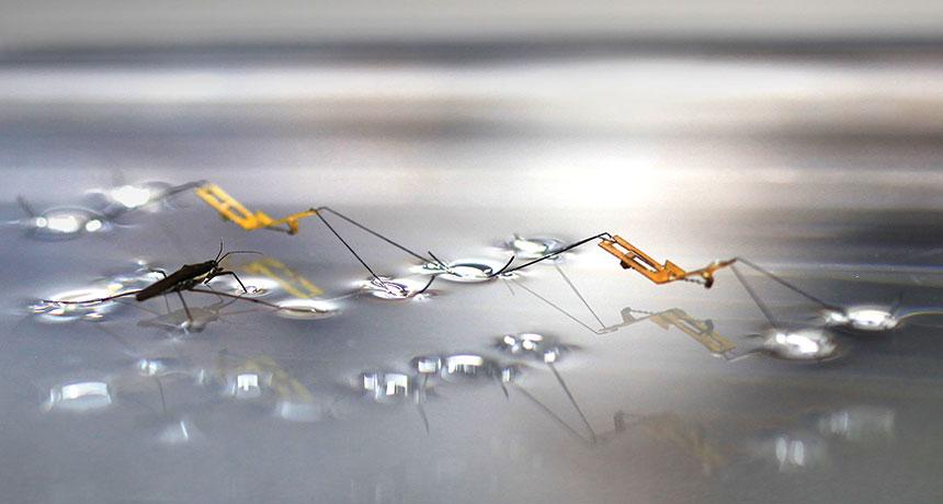 water strider
