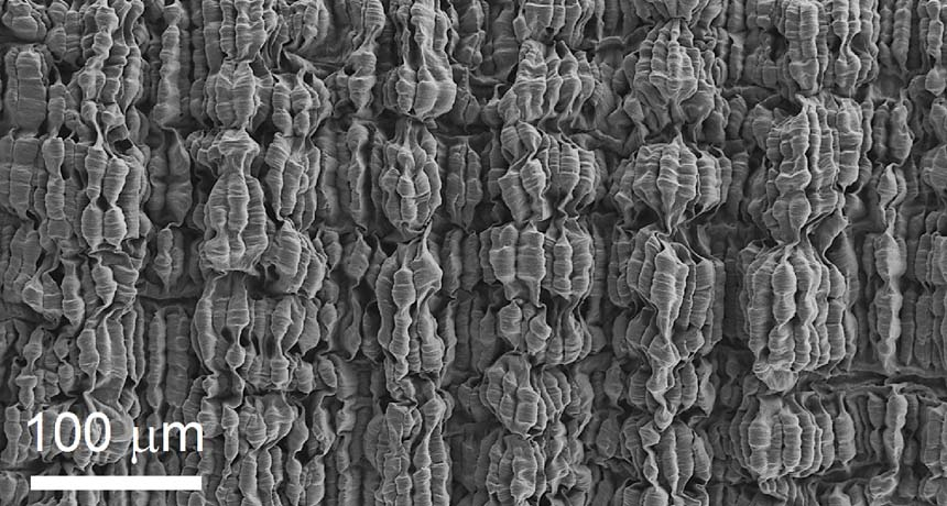 Folded layers of carbon nanotubes