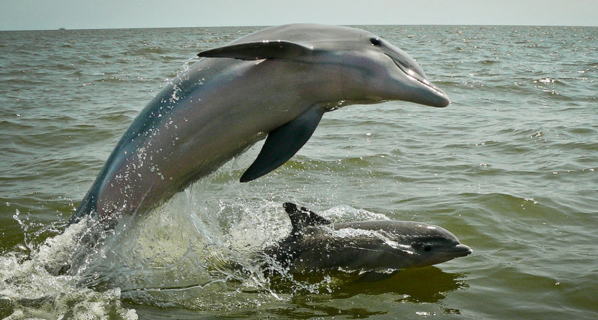 dolphin and baby dolphin