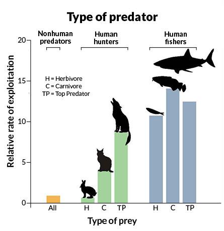 type of predator