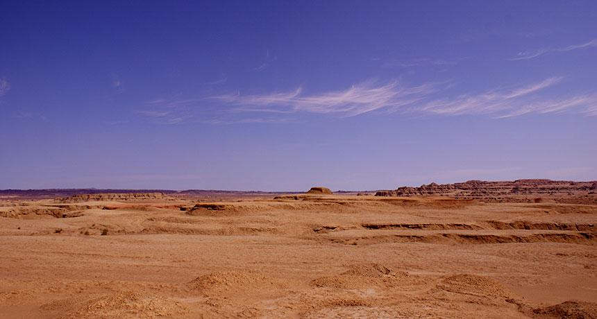 arid drylands