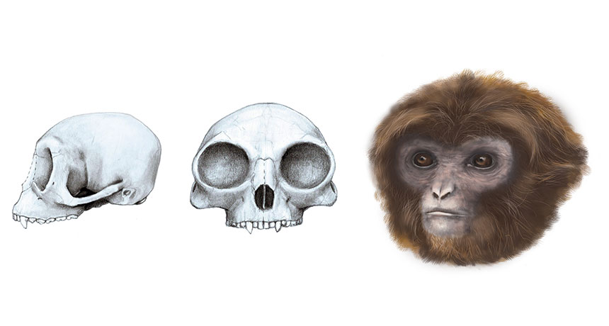 ape reconstruction
